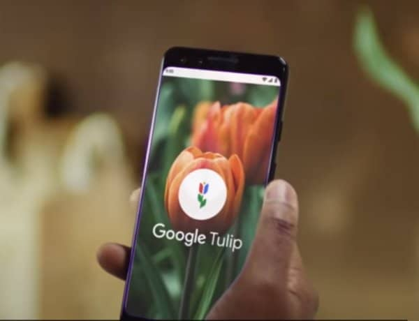 google-tulip-app(Image Credit:Google Nederlands Official Youtube Channel )